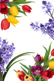 Spring Flower Border Stock Photos