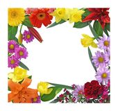 Spring Flower Border. Brightly colored flower border with white center