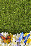 Spring flower border background, butterflies, grass copy space, vertical Stock Image