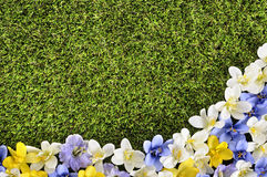 Spring flower border background, green grass copy space Royalty Free Stock Photo