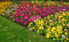 Spring Flower Border Royalty Free Stock Photography