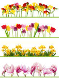 Spring flower borders royalty free stock photo