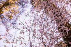 Spring Flower and branch Stock Photos