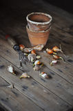 Spring flower bulbs with garden tool and ceramic pots on wooden table Stock Images