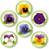 Spring Flower Buttons, Pansies. And Johnny Jump Ups (Violas)  on white background. EPS8 compatible Stock Photography