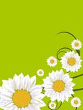 Spring flower card Stock Photos
