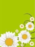 Spring flower card. Spring flower illustration on a green background Stock Photos