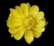 Spring flower 5 Stock Photo