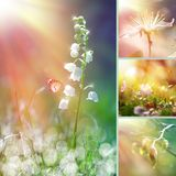 Spring flower collage Stock Image