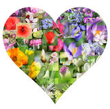 Spring flower collage in heart shape Royalty Free Stock Photo