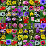 Spring Flower Collection Stock Image
