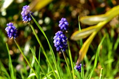 Spring flower. Spring is coming, the sun will shine flowers bloom, pulling them to the warming sun and blue sky background in the countr grass great composition Stock Photo