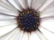 Spring flower. Spring, flower, daisy, insect, good, smeel, background Royalty Free Stock Photos