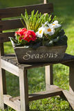 Spring flower decoration in garden with primroses Stock Images