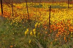 Spring flower display Royalty Free Stock Image