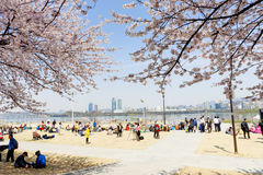 Spring Flower Festival In Seoul Stock Photos