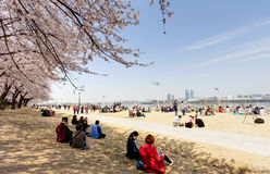 Spring Flower Festival in Seoul Stock Photo