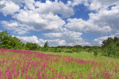 Spring flower field and blue sky Royalty Free Stock Photography