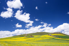 Spring flower field and blue sky. Royalty Free Stock Images
