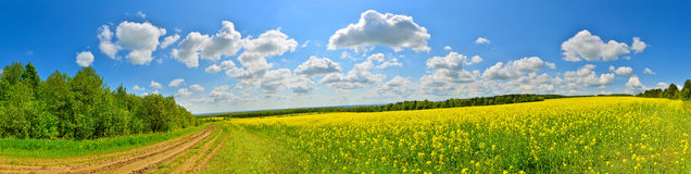 Spring flower field royalty free stock image
