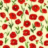 Spring flower field seamless pattern background. Red flowers of blooming wild poppy with green stem, leaf and floral bud. Floral pattern for wallpaper, textile Stock Photography