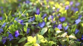 Spring flower field stock footage