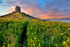 Spring flower field with trail to castle tower. Vivid colors bright yellow pasture colorful spring meadow Royalty Free Stock Photography