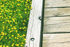 Spring flower field and wooden trail path Stock Photography