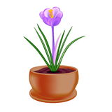 Spring flower in a flowerpot on white background. Raster version Royalty Free Stock Photo