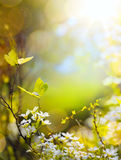 Spring flower and fly butterfly; abstract sunny beautiful Easter Royalty Free Stock Photo