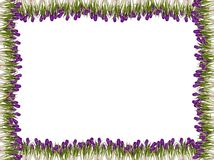 Spring flower frame Royalty Free Stock Images