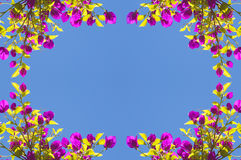 Spring Flower Frame Royalty Free Stock Photography