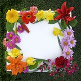 Spring Flower Frame stock images