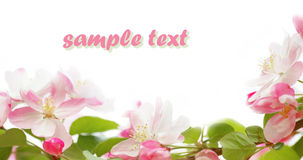 Spring flower frame Royalty Free Stock Photos