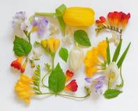 Spring Flower Frame Royalty Free Stock Image