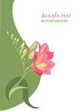 Spring flower. Freesia 2. Floral decorative hand drown element Stock Photography