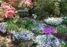 Spring Flower Garden Royalty Free Stock Photos