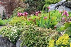 Spring flower garden Royalty Free Stock Image