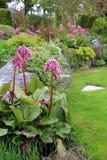 Spring flower garden Stock Photography