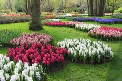 Spring flower garden Royalty Free Stock Photos