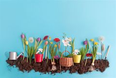 Spring flower garden stock images