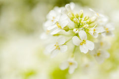Spring flower in garden with shallow focus. And space for text stock image