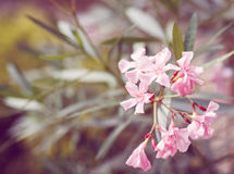 Spring flower in garden with shallow focus Royalty Free Stock Photos