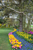 Spring Flower Garden. Winding border of tulips and grape hyacinth plants border a well manicured lawn. Vertical stock image