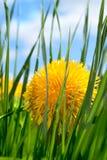 Spring flower in grass Stock Photo