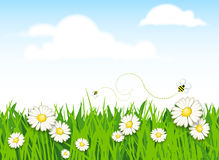 Spring flower and grass background Royalty Free Stock Photo