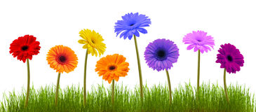 Spring flower and grass over white Stock Images