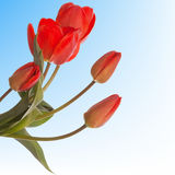 Spring flower.Holiday card Royalty Free Stock Image