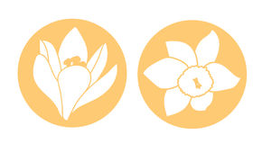 Spring flower icon. White narcissus and crocus flower. Orange round circle flat icons. Vector illustration. Spring flower icon. White narcissus and crocus flower Stock Images