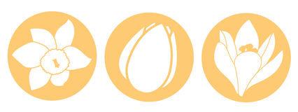 Spring flower icon. White narcissus, tulip and crocus flowers. Orange round circle flat icons. Vector illustration Royalty Free Stock Photos